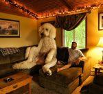 Gigantický pes, alebo len šikovné dielo grafika?