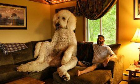 Gigantický pes