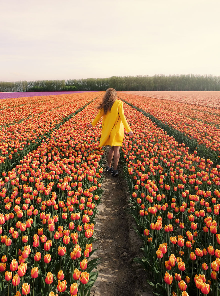 holandsko_tulip_12