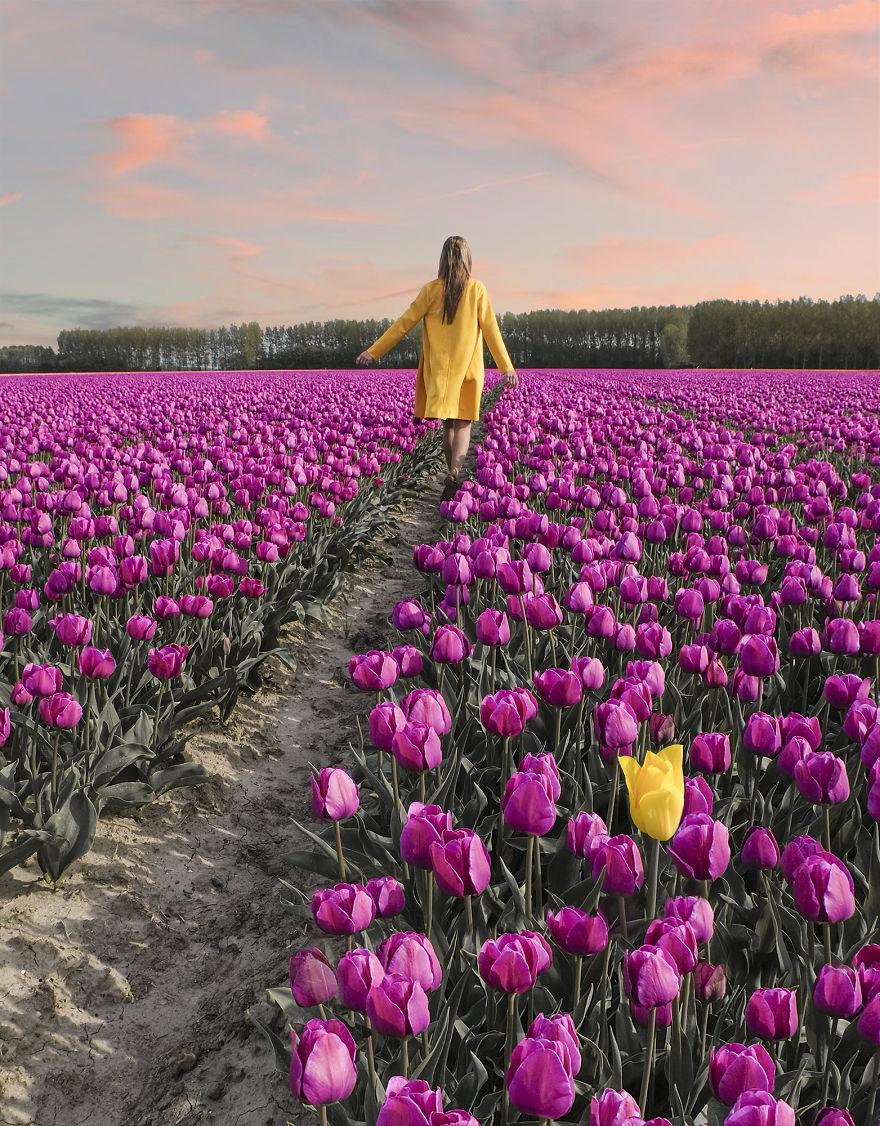 holandsko_tulip_14