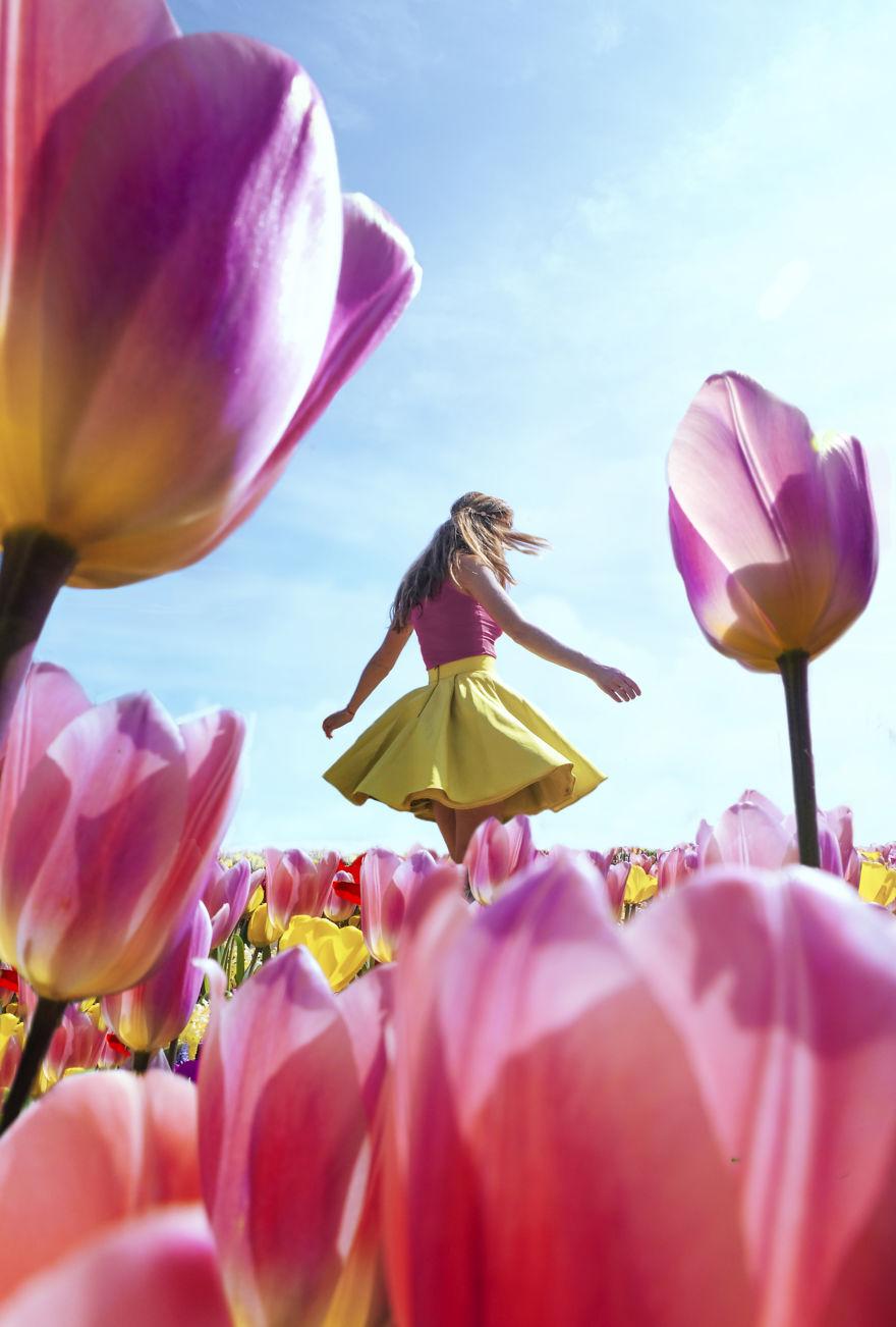 holandsko_tulip_2