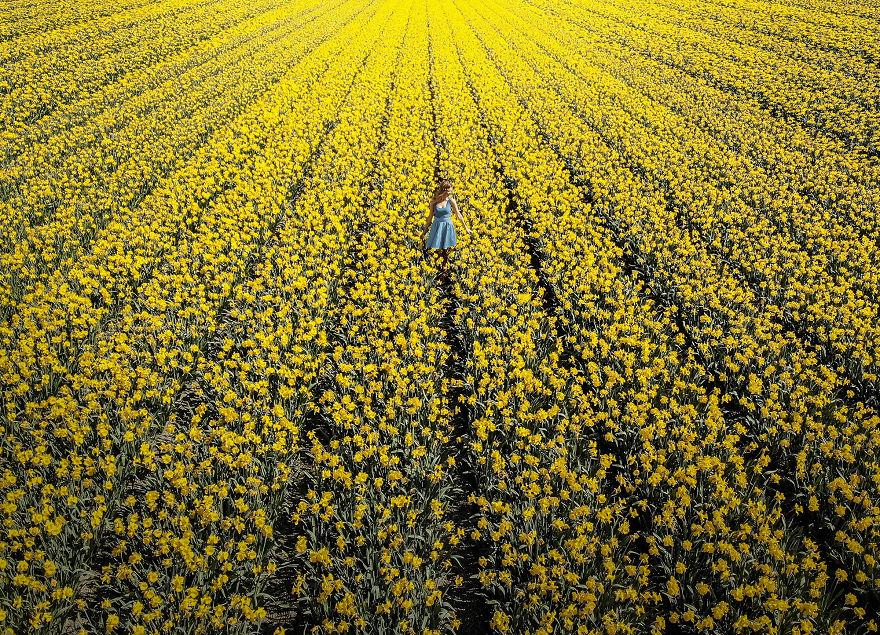 holandsko_tulip_3