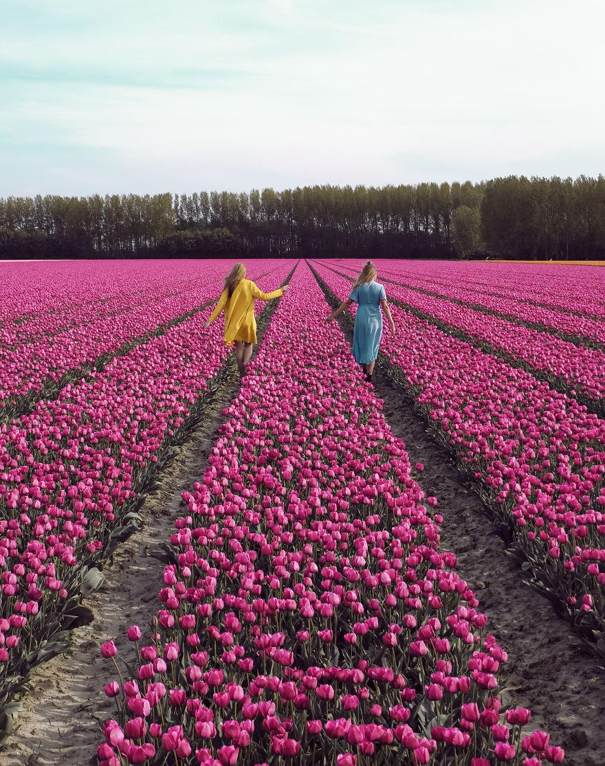 holandsko_tulip_6