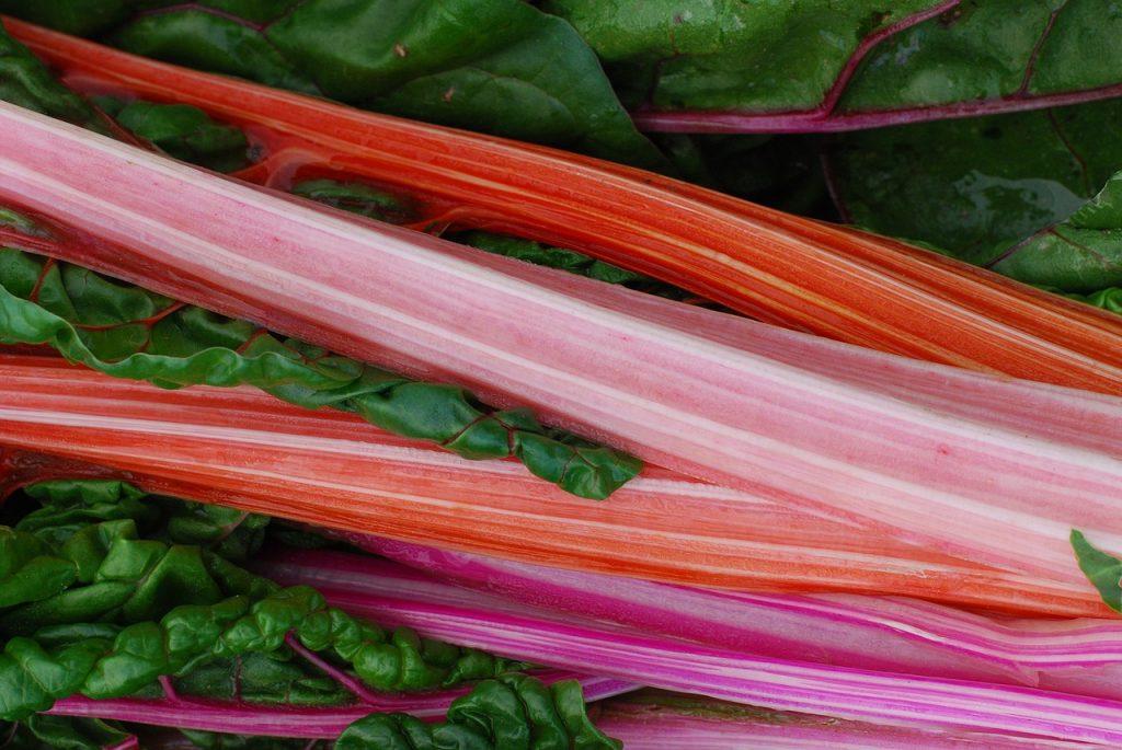 rhubarb-2357834_1280