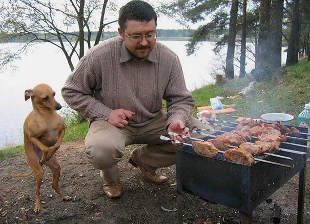 hladné psy