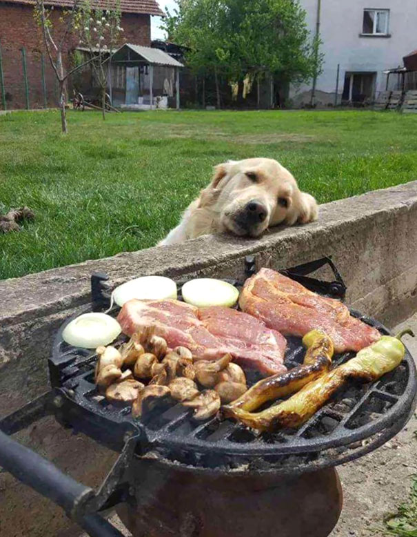 pes_hlad_6