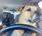 10+ vtipných fotografií, ktoré poukazujú na problémy taxislužby Uber