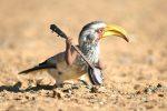 Internet zabáva ľudí s novinkou: Vtákom dorábajú ľudské ruky