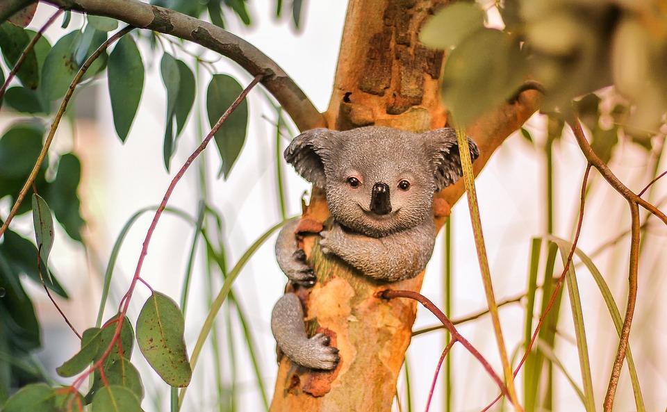 koala_fingerprint
