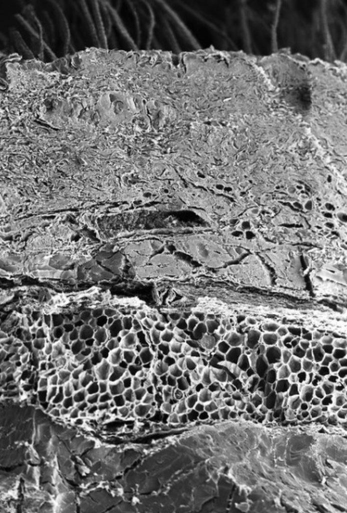 pod_mikroskopom_5