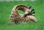 Spánok týchto zvierat je neuveriteľný! Presvedč sa sám…