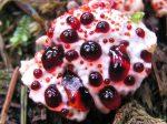 Rastliny, ktoré ťa môžu zabiť, aj keď sú nádherné