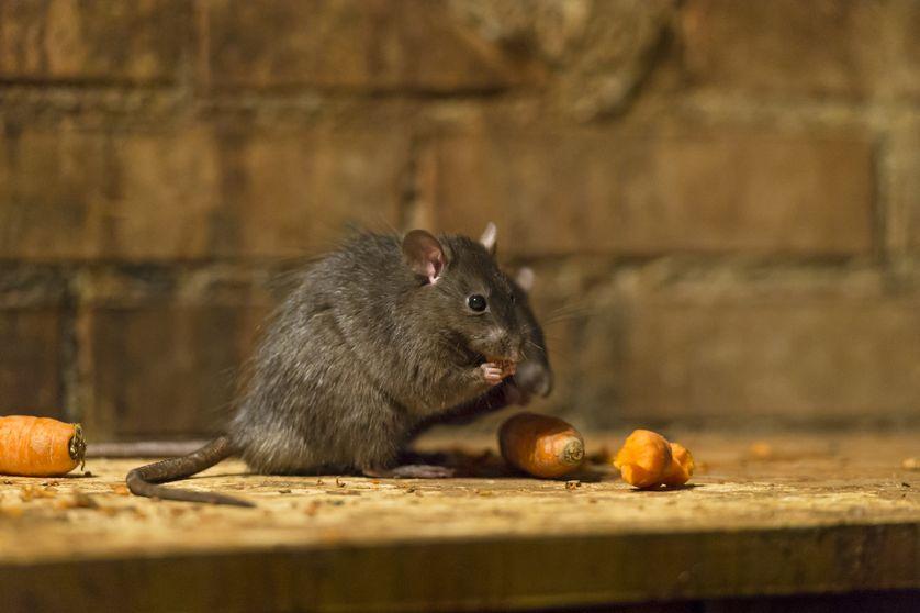 Najinteligentnejšie zvieratá