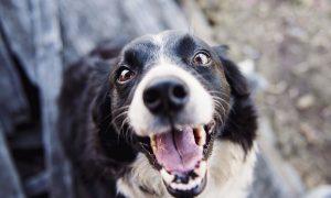 10 príbehov, v ktorých zvieratá predviedli svoju ohromujúcu inteligenciu