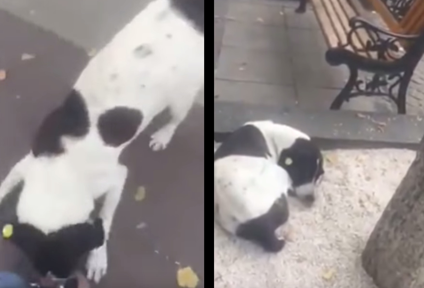 Dojemné stretnutie: Starý pán po rokoch našiel svojho strateného psa