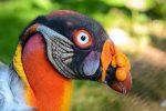 Je to vták alebo mimozemšťan? 10 operencov, s ktorými sa matka príroda vyhrala