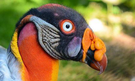 Je to vták alebo mimozemšťan? 10 prípadov, kedy sa matka príroda vyhrala
