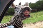 10+ Tieto zvieracie ksichtíky ti zaručene spravia náladu!