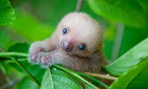 zvieracie bábätká