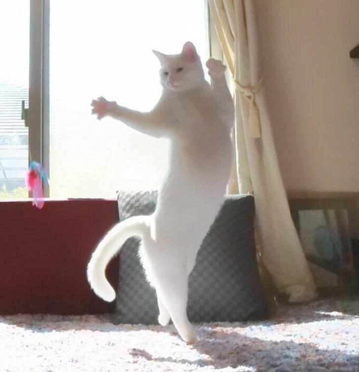 fotografie mačiek