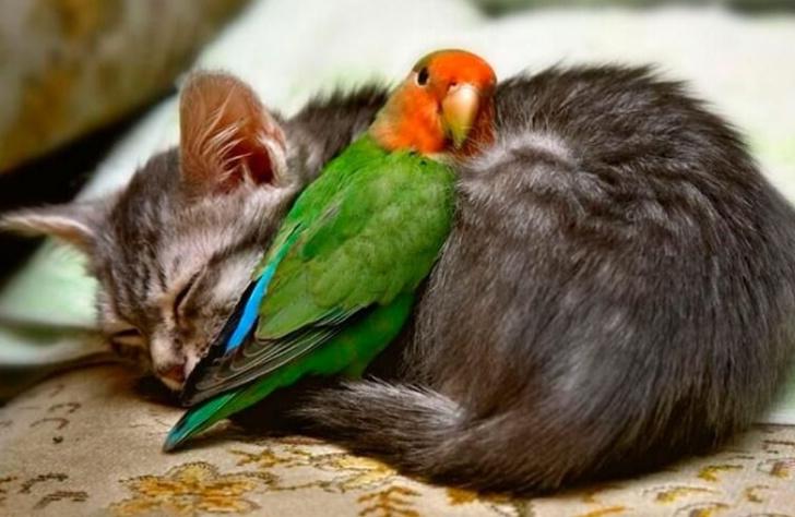 priateľstvo