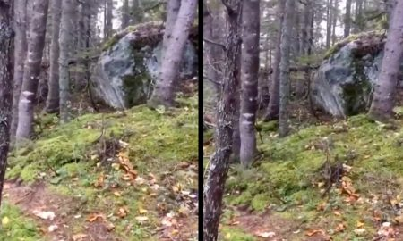 V Kanade sa podarilo natočiť bizarné video: Videl si už, ako dýcha les?