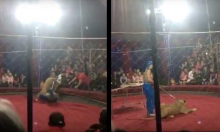 Nevhodné pre slabšie povahy: Levica sa v cirkuse zahryzla do 4-ročného dievčatka