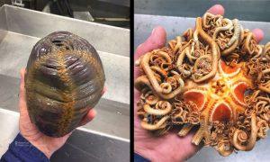 Rybár na sociálne siete zverejňuje svoje najdesivejšie úlovky z hlbín