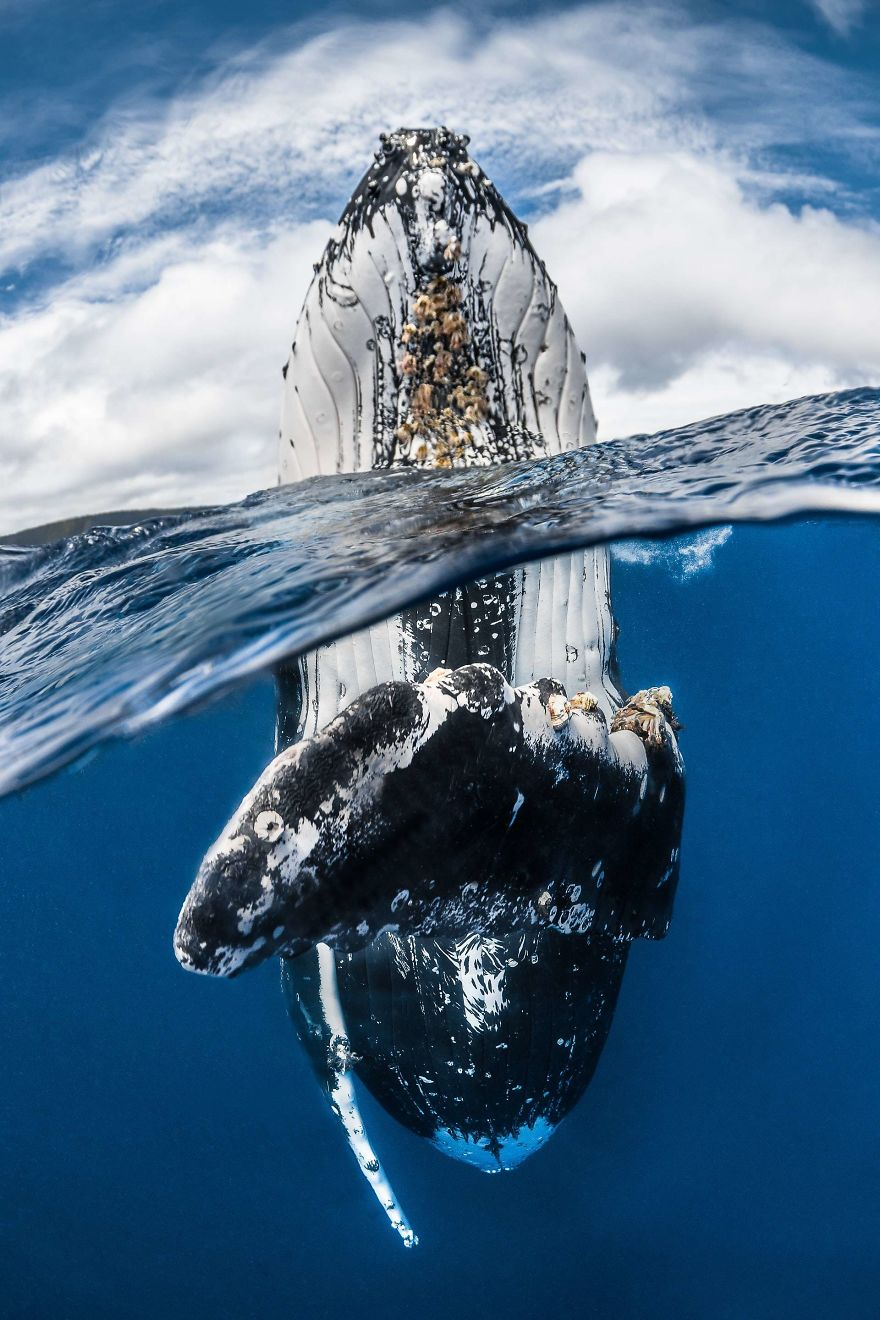 underwater_15