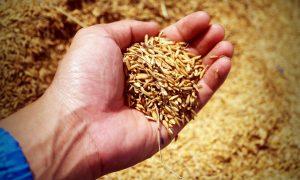 Má ryža skutočne taký pozitívny vplyv na naše telo?