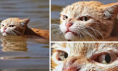 nahnevané mačky