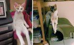 Tieto fotografie ťa pobavia: Zvieratá vedia sedieť ako ľudia