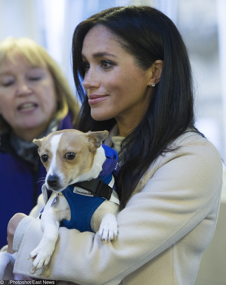 "The Duchess of Sussex visits Mayhew on Wednesday 16th January to meet with staff, volunteers and beneficiaries, and hear more about the animal welfare charity?s various initiatives, from community engagement to international projects. This will be Her Royal Highness?s first official visit to Mayhew in her new role as Patron. PIC: Duchess meets a Jack Russel called ""Minnie"""