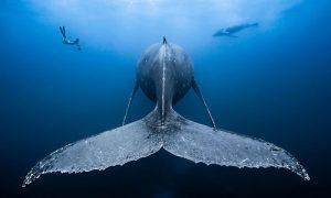 Toto sú tie najlepšie podvodné fotografie. Za každou sa ukrýva neobyčajný príbeh
