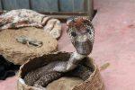 TOP10: Toto sú tie najjedovatejšie hady sveta!