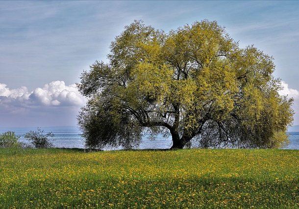 plant-a-tree-610x426