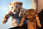 Zvieratá na týchto fotografiách nemali svoj najšťastnejší deň