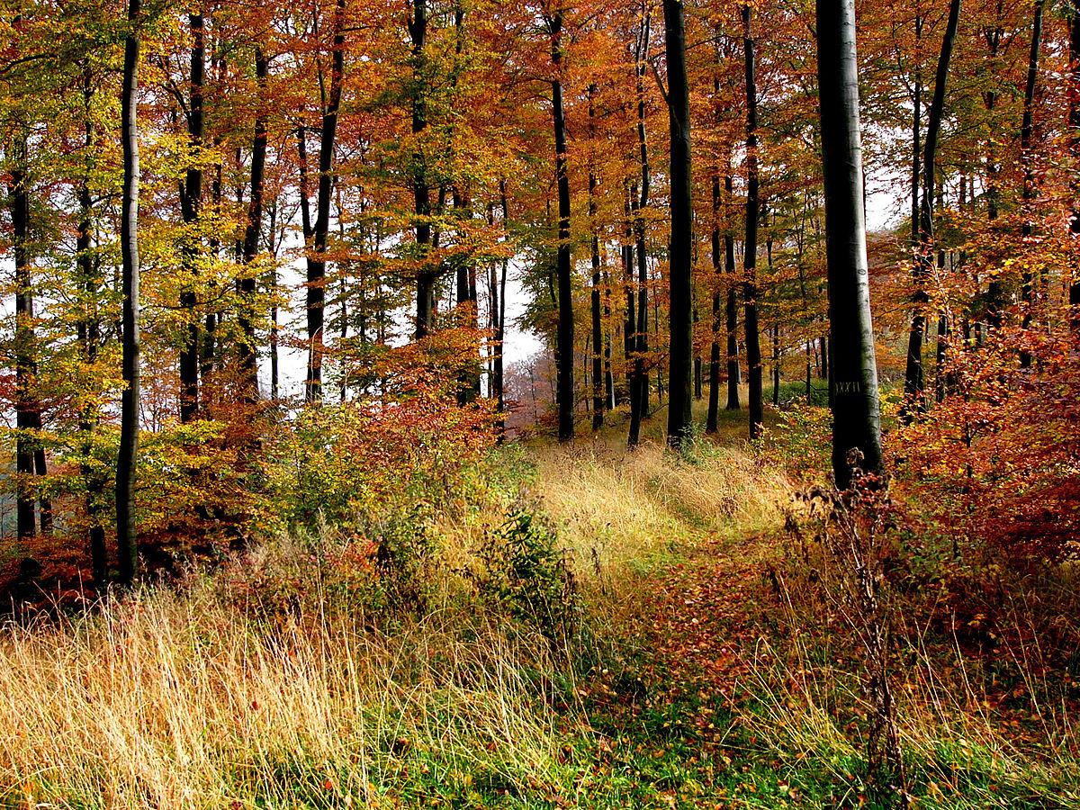 Krutá porážka rímskych légií: Kde sa vlastne nachádza Teutoburský les?