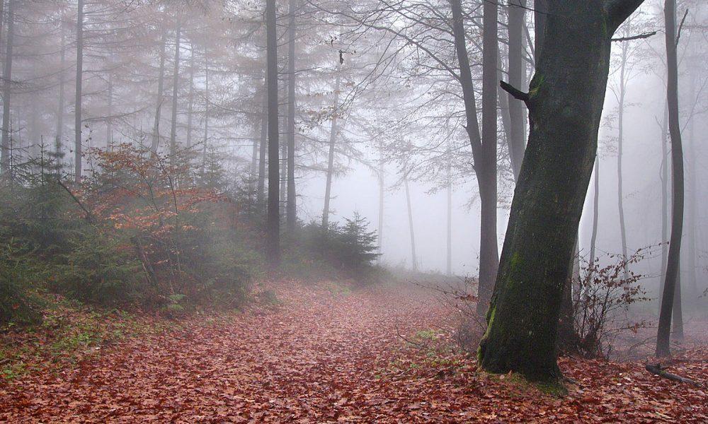 Krutá porážka Rímskych légii: Bitka vTeutoburskom lese