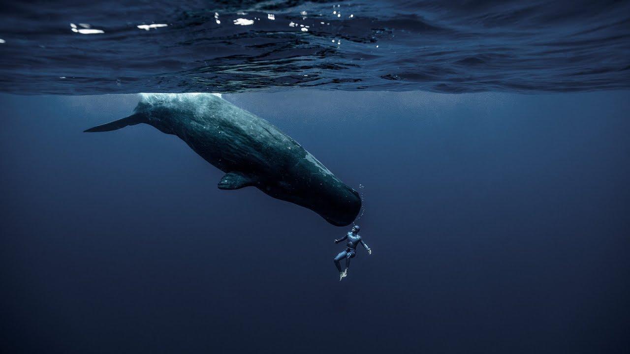 Francúzsky potápač natočil unikátne nadprirodzené video