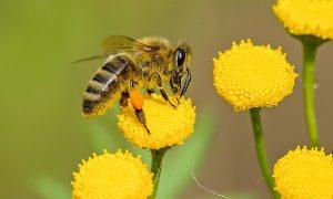 8 malých vecí, ktoré môžeme spraviť a zachrániť tak včely pred vyhynutím