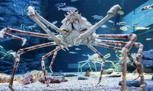 10 najväčších zvierat