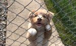 Pozor, zlý pes! Aj takéto beštie sa skrývajú za bránami