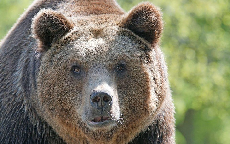 """Na Kamčatke v Rusku medveď """"bez povolenia"""" prešiel cez kontrolu letiska"""