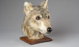 Ako vyzeral škótsky pes pred 4500 rokmi?