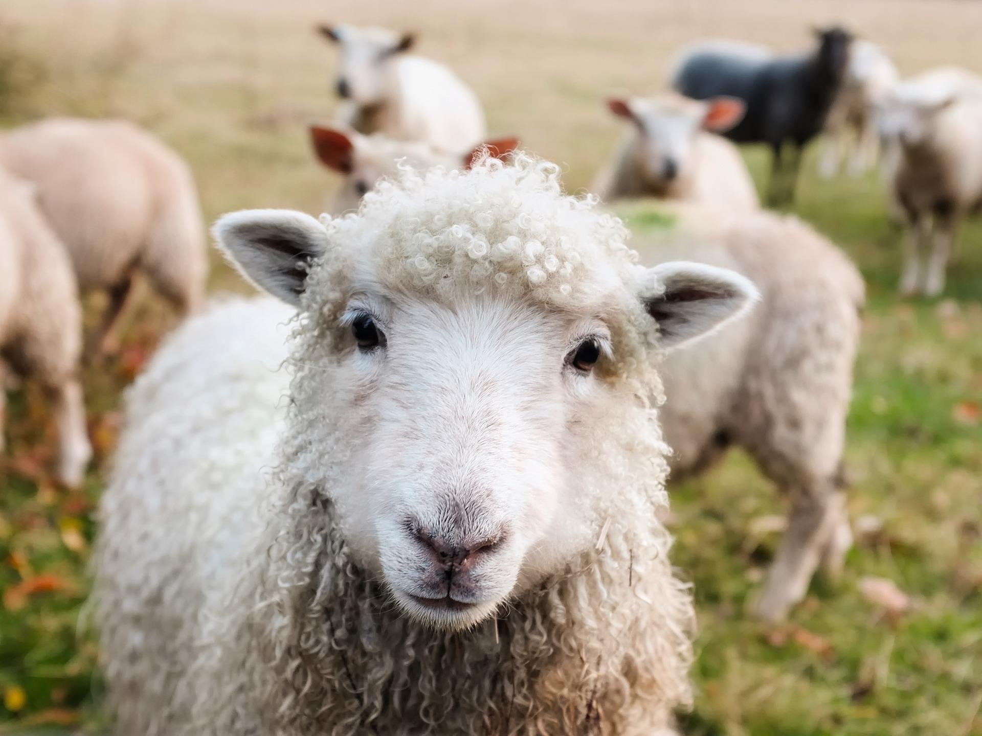 20 faktov zo zvieracej ríše