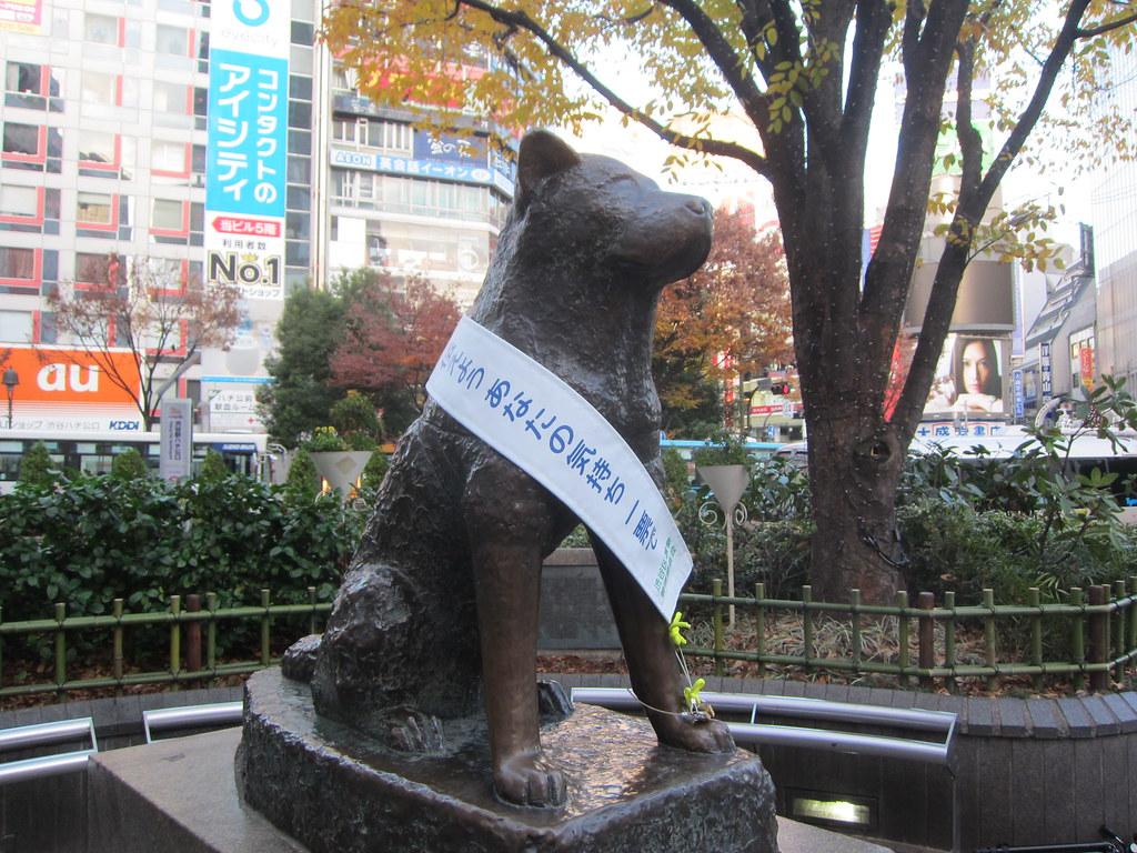 Príbeh vernosti a lojality: Verný pes Hačikó