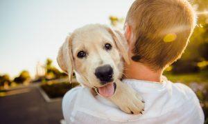 Byť milovníkom psov môže byť vo vašich génoch