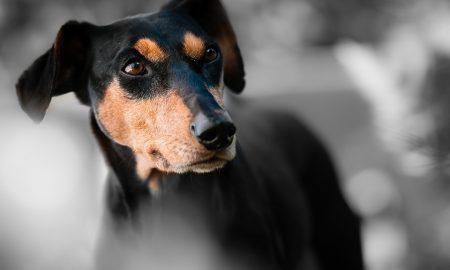 Je tvoj pes stresovaný? Prinášame ti znaky stresu u psa