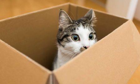 Prečo mačky tak milujú krabice?